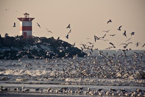Change is coming - Seagulls 3  Basdemos