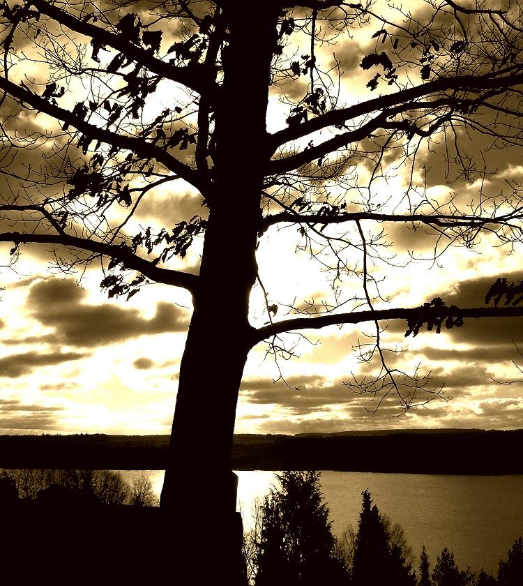 Tree Over Sun © Egidijus Mika