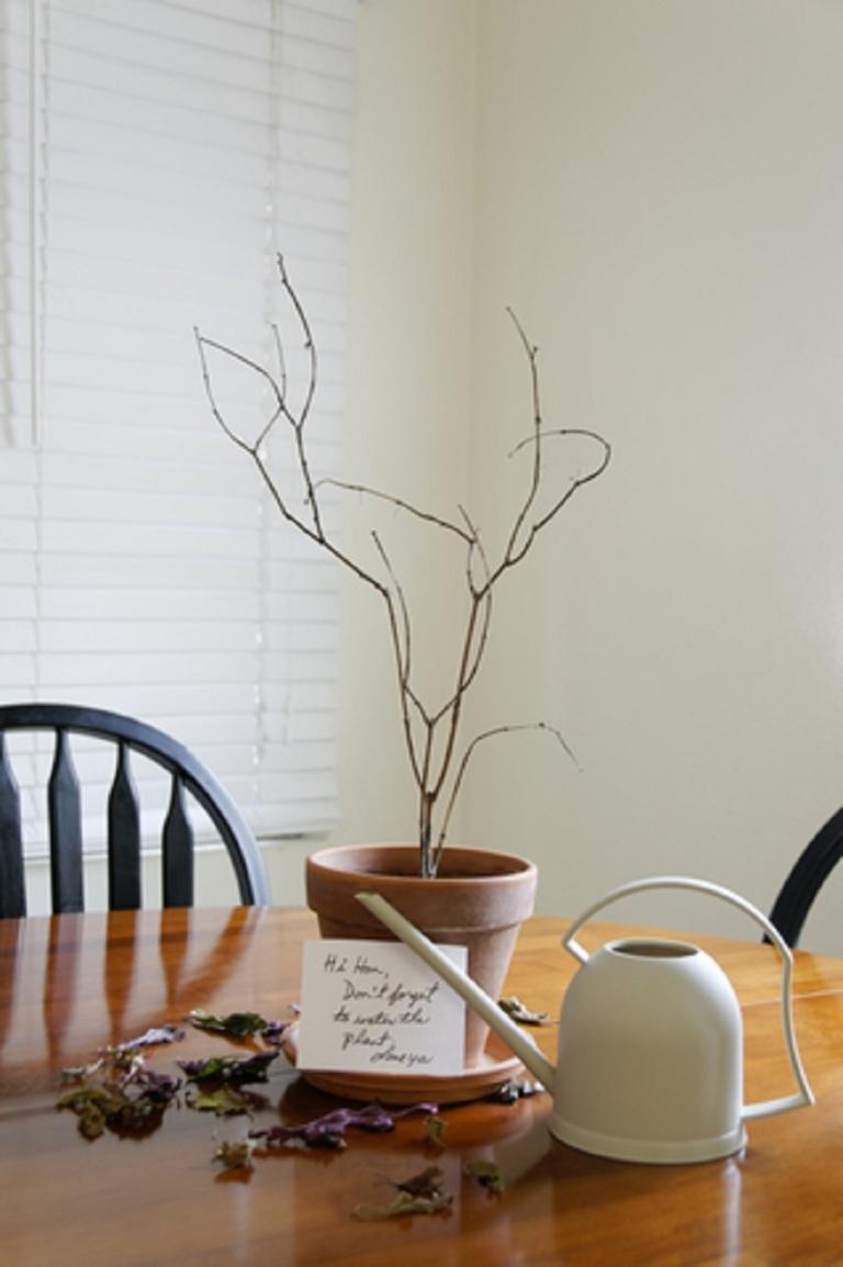 Dead Plant - No Water - © Wayneandrose  Dreamstime.com