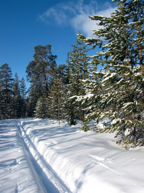 Ski Track In The Winter Forest - © Rvc5pogod