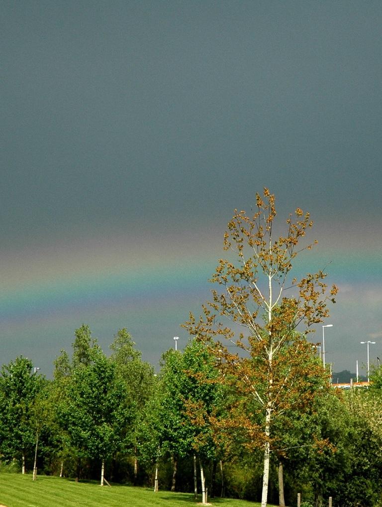 After The Storm © Sandy Matzen.jpg