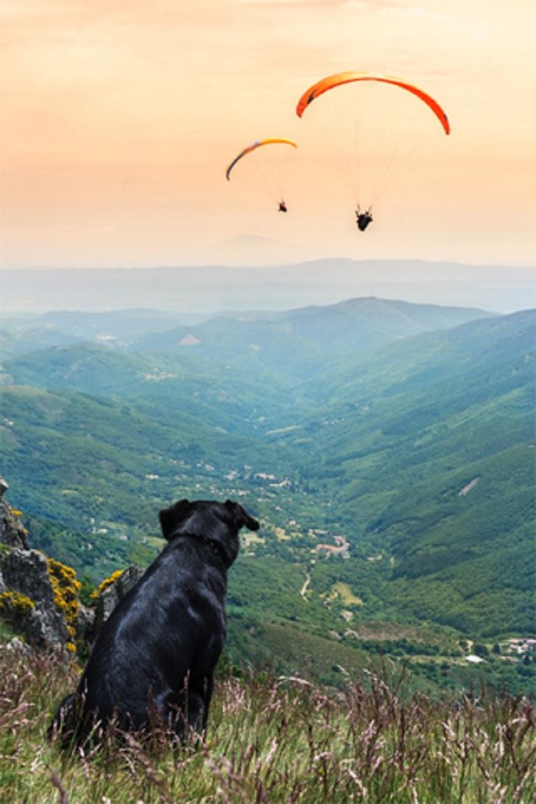 Hang Gliding France Dog Watching © Hornet83.jpg