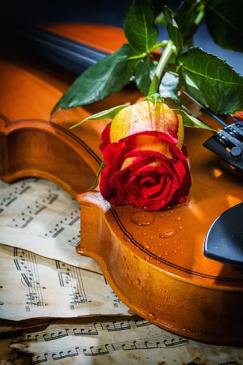 Violin Sheet Music and Rose © Netfalls.jpg