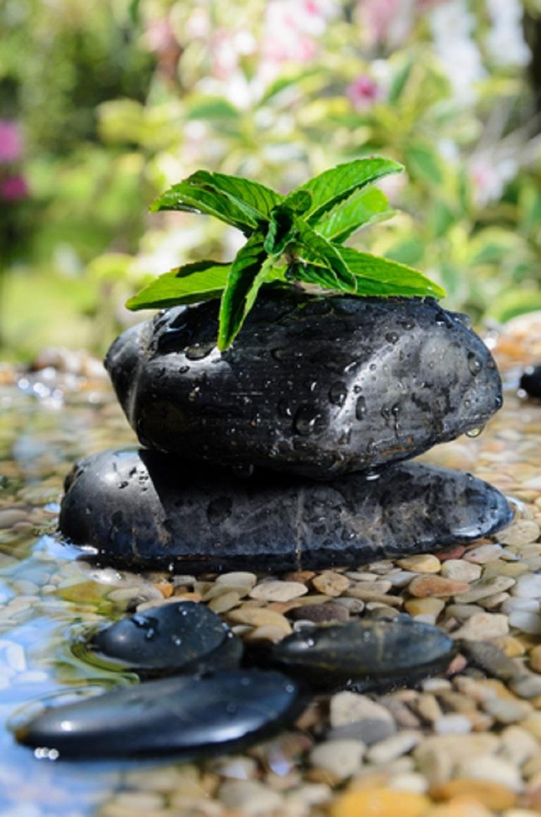 Zen Garden Peppermint © Dirima.jpg